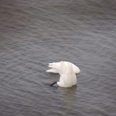Köpfchen in das Wasser ... :-)