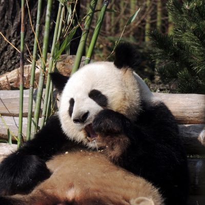 Jiao Qing im Bambusparadies