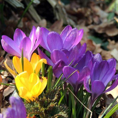 Noch mehr Frühling :-)