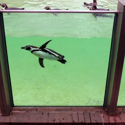 Fliegen im Wasser