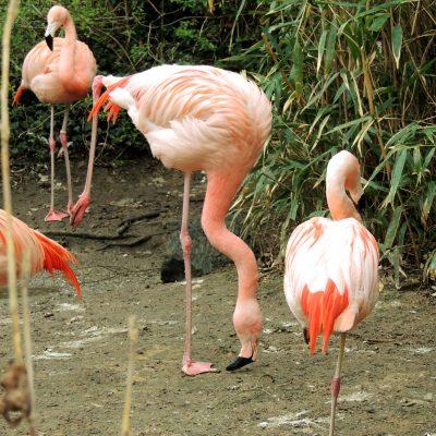 Yoga für Flamingos