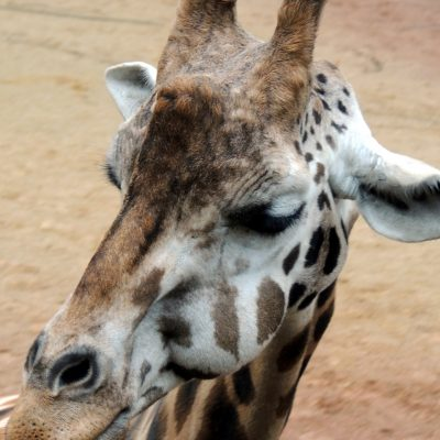 180413_hannover_zoo044