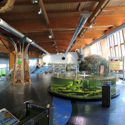 Der Eingangsbereich vom Wildpark