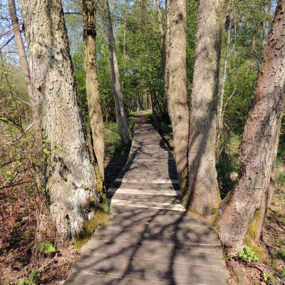 Der Weg durchs Moor