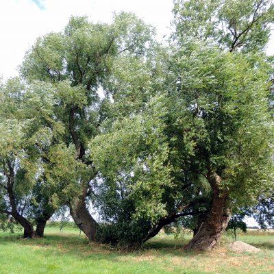 Ein toller Baum