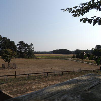 Blick vom Luchsstand über den Park