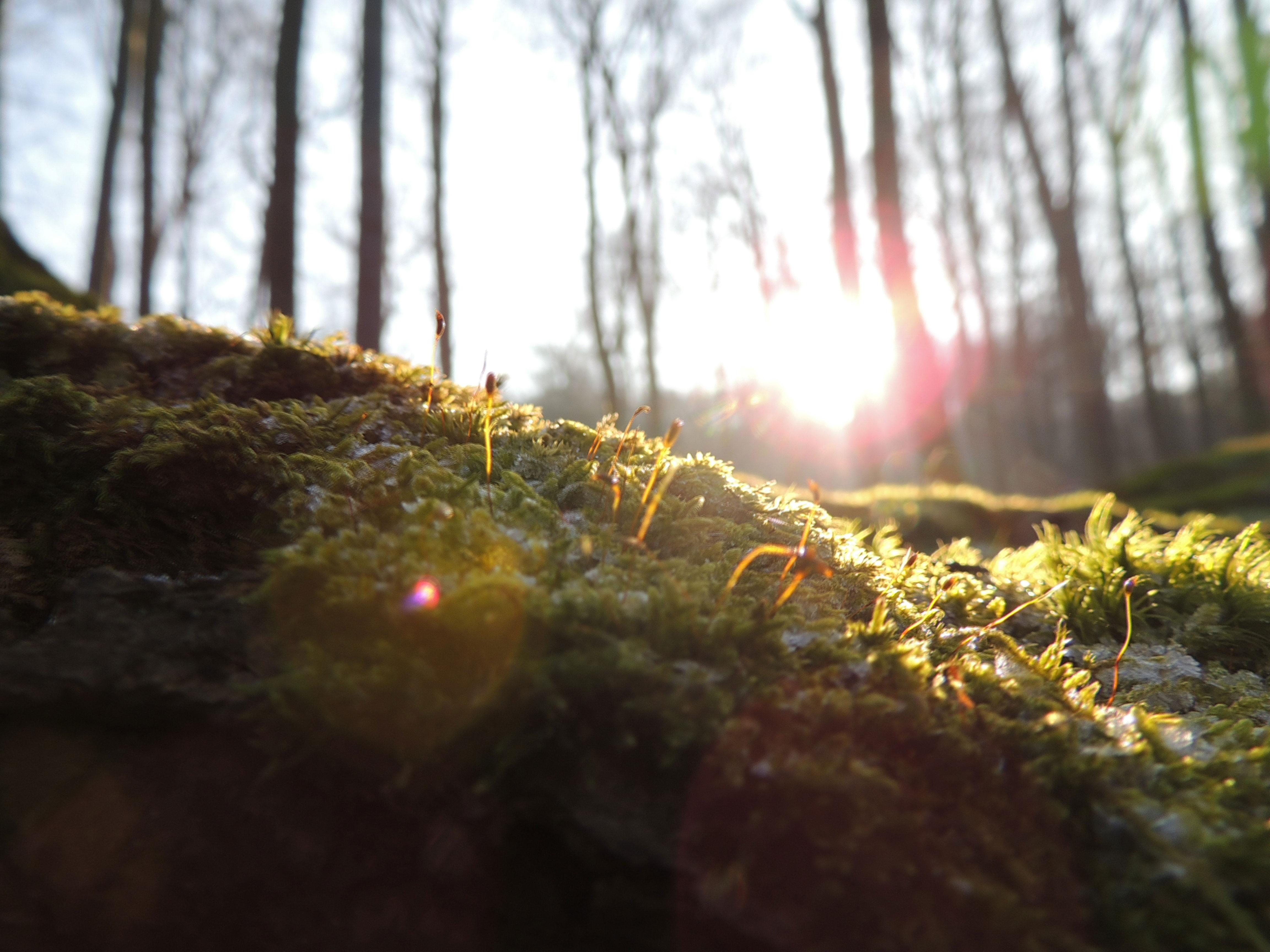 Bild - Moos in der Sonne
