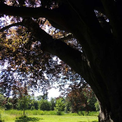 alte Bäume haben was beschützendes