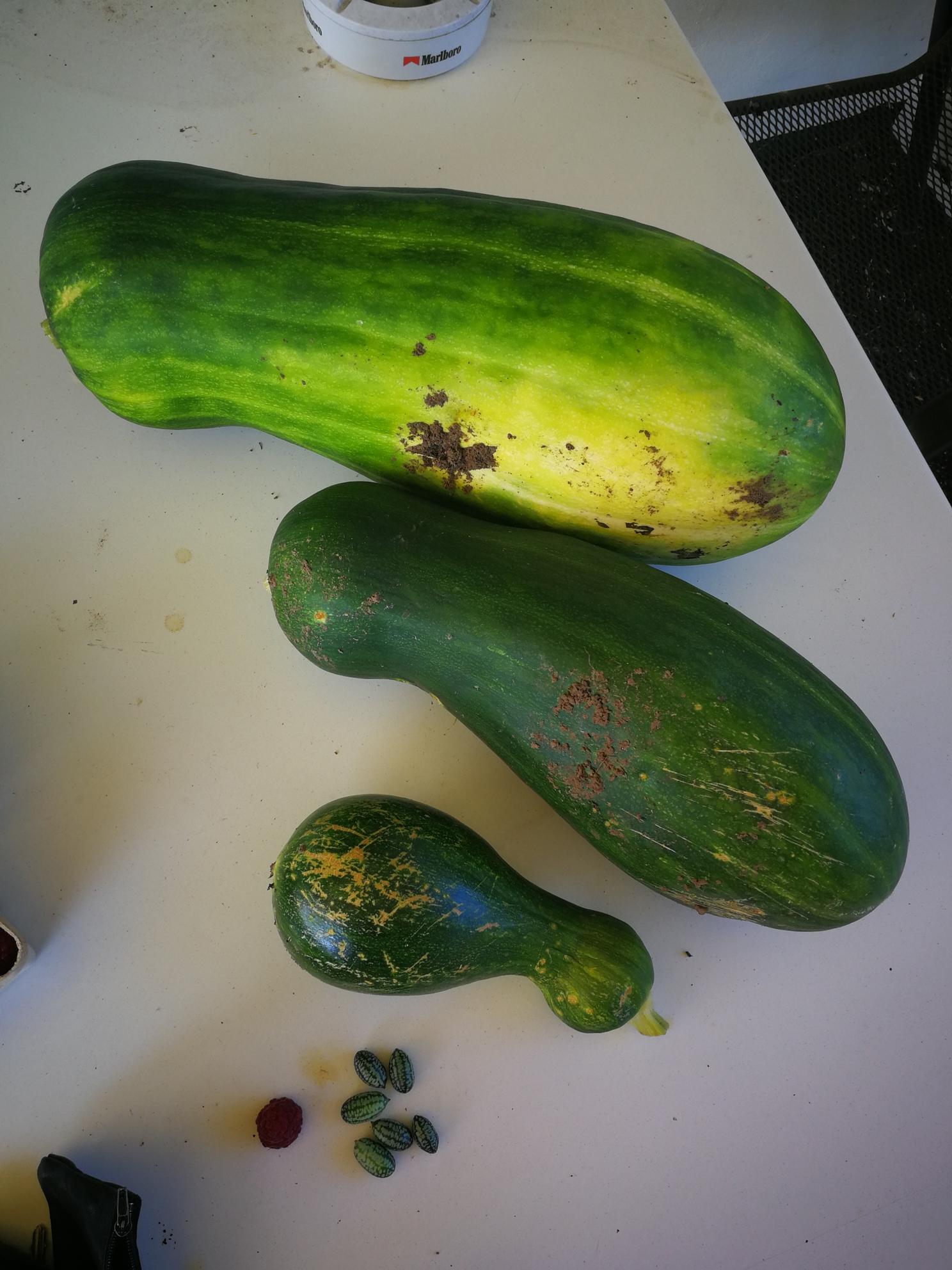 Mini-Gurke bis Riesen-Zucchini