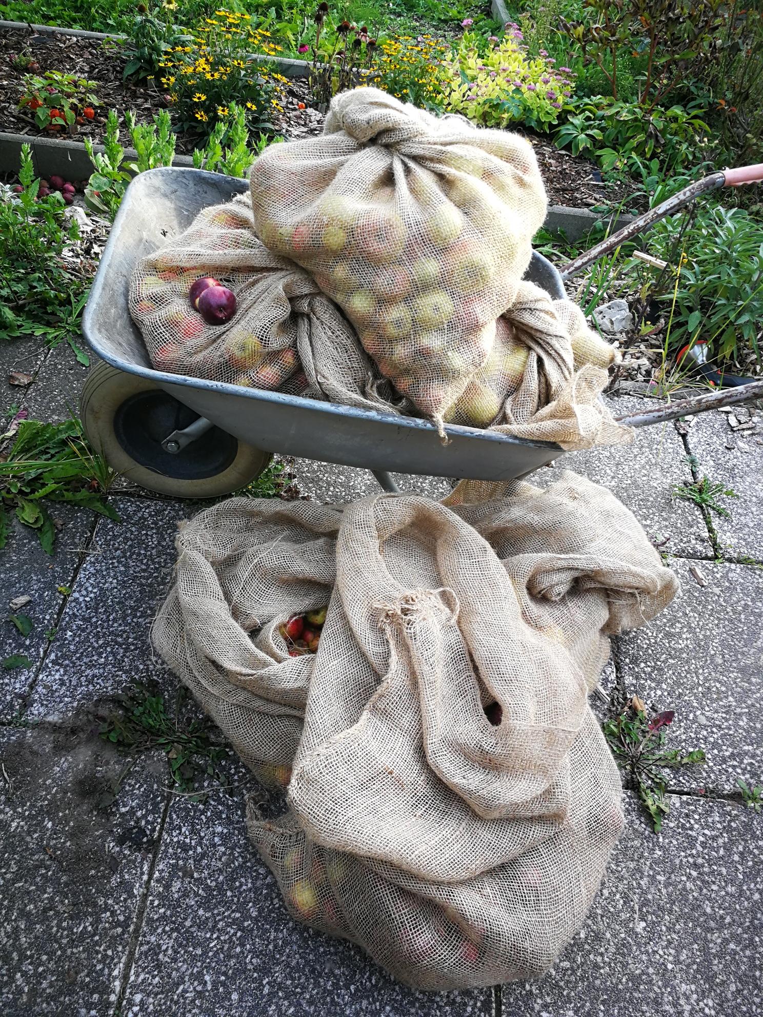 Eine mittelgrosse Apfelernte